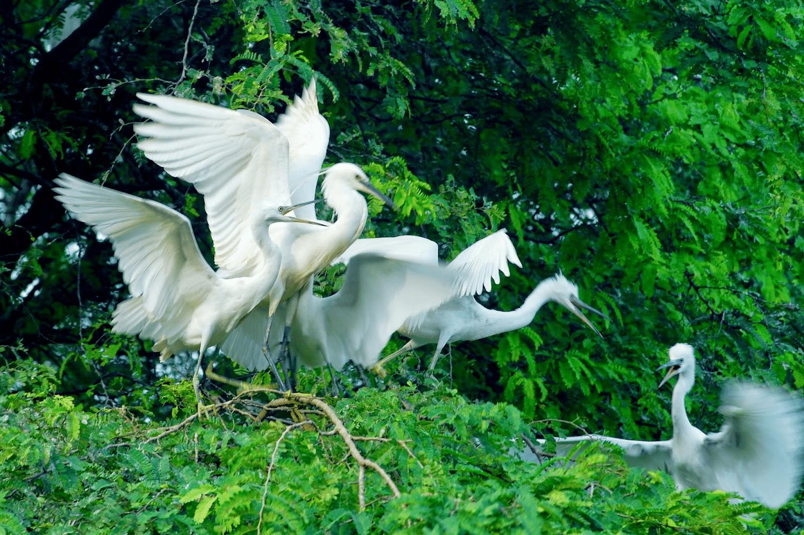 Nông trại du lịch - Sân chim Vàm Hồ